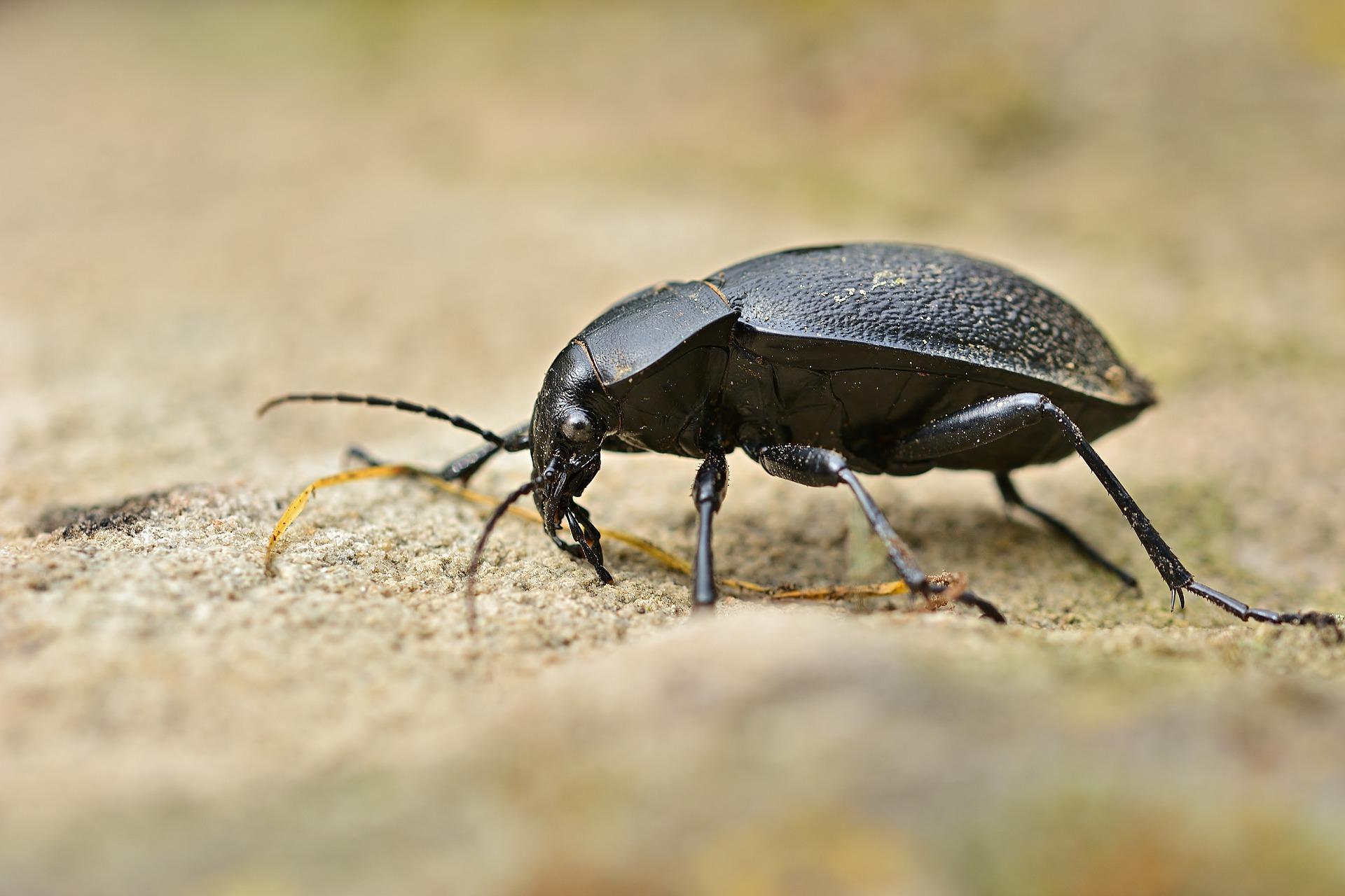 3 beetle-5224434_1920