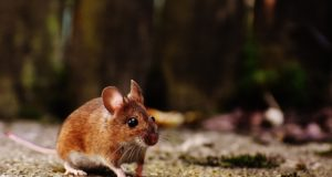 8 mouse-1708347_1920